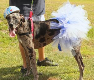 Halloween Costume for Large Breed Dogs & How to take your dog trick or treating