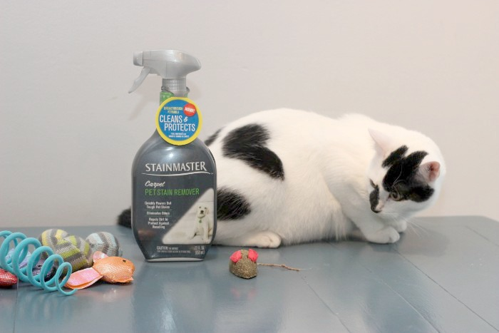 Does STAINMASTER carpet pet stain remover work?